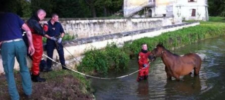 Rosny-sur-Seine : un cheval repêché indemne dans la Seine