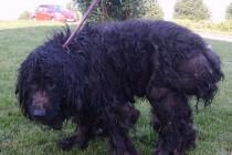 Mantes-la-Ville : un chien enfermé pendant 2 ans dans un espace de 2 m²