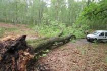 Yvelines : appel à la prudence dans les forêts