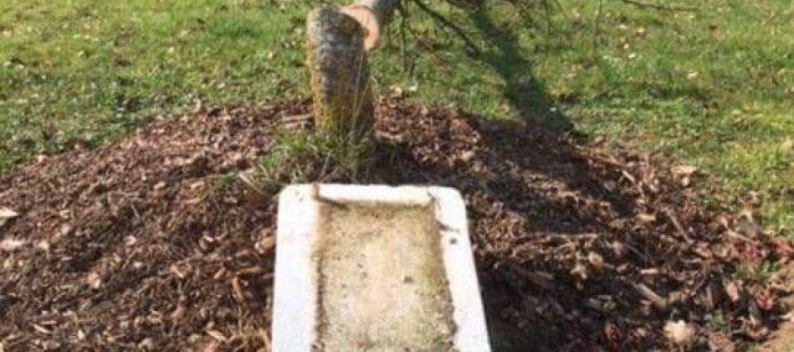 Des arbres de la laïcité vandalisés à Magnanville, Mantes-la-Ville, Rosny-sur-Seine et Limay