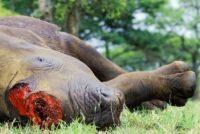 Zoo de Thoiry : ouverture d'une information judiciaire après le meurtre du rhinocéros