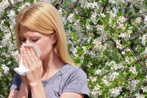 Santé : attention, l'allergie au pollen est de retour