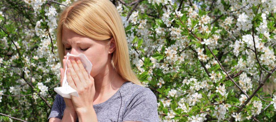 Alerte Santé : attention, l'allergie au pollen est de retour