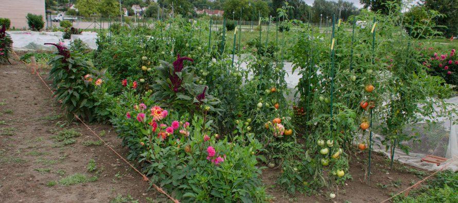 Jardiniers de France du Val de Seine : journées portes ouvertes ce weekend
