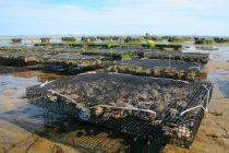 Coquillages – Moules – Huîtres : message d'alerte sanitaire à Limay