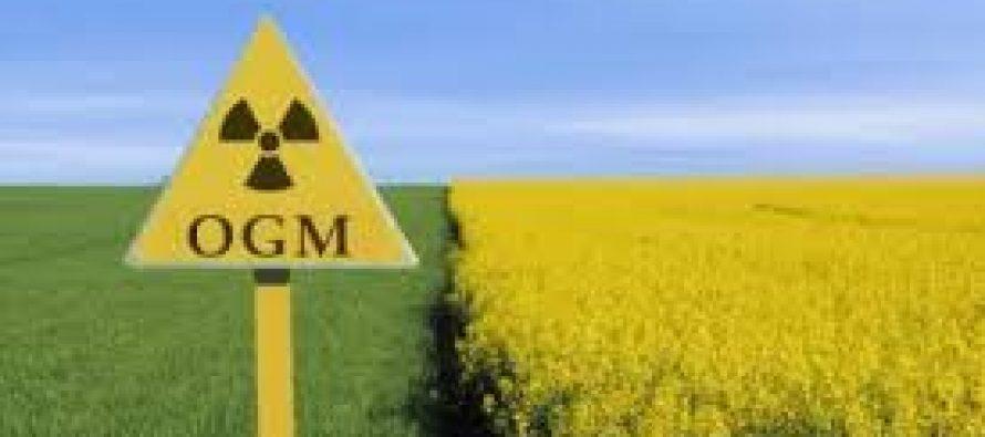 Collectif 12 : projection d'un documentaire sur les dangers des OGM