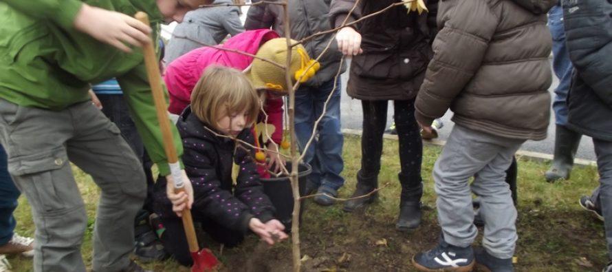 La ville de Magnanville va planter un nouvel arbre de la laïcité