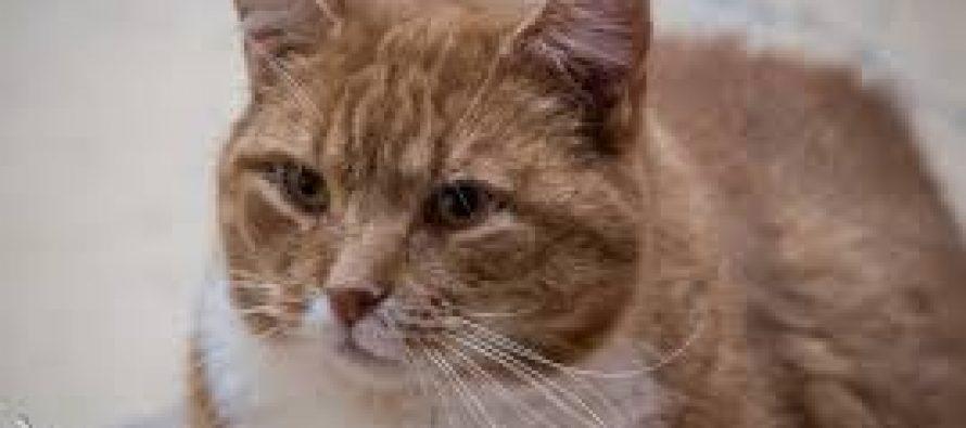 Cipam – Truffaut Buchelay : exposition de chats à adopter les 27 et 28 janvier