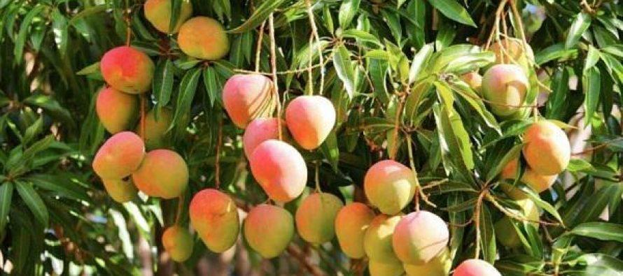 Asso Al Yatim : faites un don pour l'opération «arbres fruitiers»