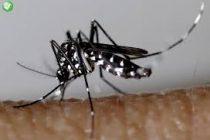 Santé : attention, des moustiques tigre ont été retrouvés à Mantes-la-Jolie