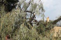 Orages : la foudre s'est abattue sur le Mantois