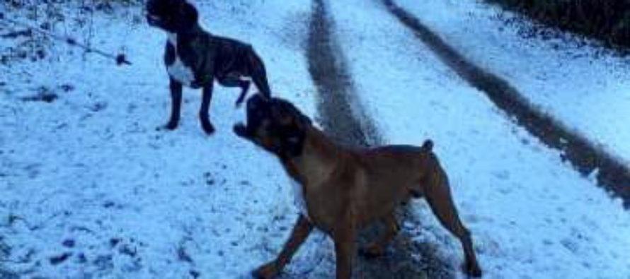 Bois de Rosny-sur-Seine : quatre personnes attaquées par deux boxers