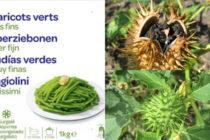 Alerte Santé :  des haricots verts vendus par Carrefour contaminés par une plante toxique
