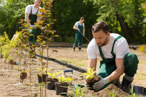 jardinier-professionnel-480x0-c-default