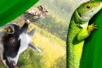 Fête de la nature à Limay : assistez à la la quatrième édition