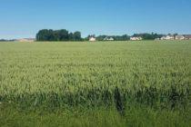 Magnanville : des fortes odeurs après un épandage agricole de boues