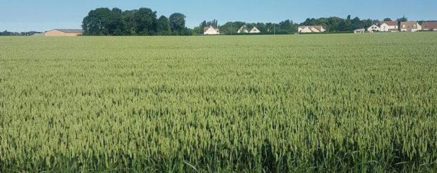 Magnanville : des fortes odeurs après l'épandage agricole de boues