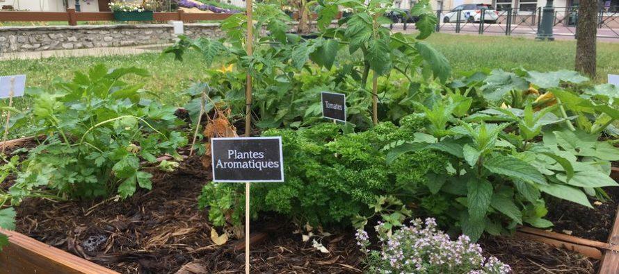 Magnanville : des carrés potagers pour embellir le cadre de vie