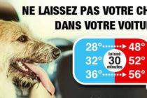 Prévention – Canicule : ne laissez pas votre chien dans votre voiture