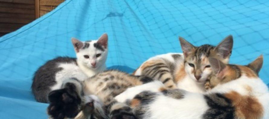 Buchelay : adoptez un chat au Chenil Intercommunal de Protection Animale du Mantois