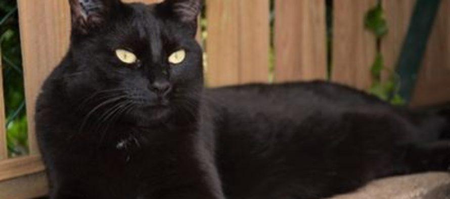 Cipam – Truffaut Buchelay : exposition de chats à adopter les 21 et 22 septembre