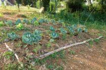 Magnanville : participez aux ateliers techniques du jardin humain