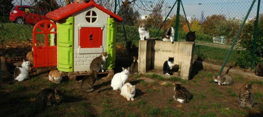 Coronavirus : l'adoption de chiens et chats désormais possible dans les refuges