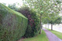 Magnanville : la mairie demande aux habitants de tailler leurs arbres, haies et buissons